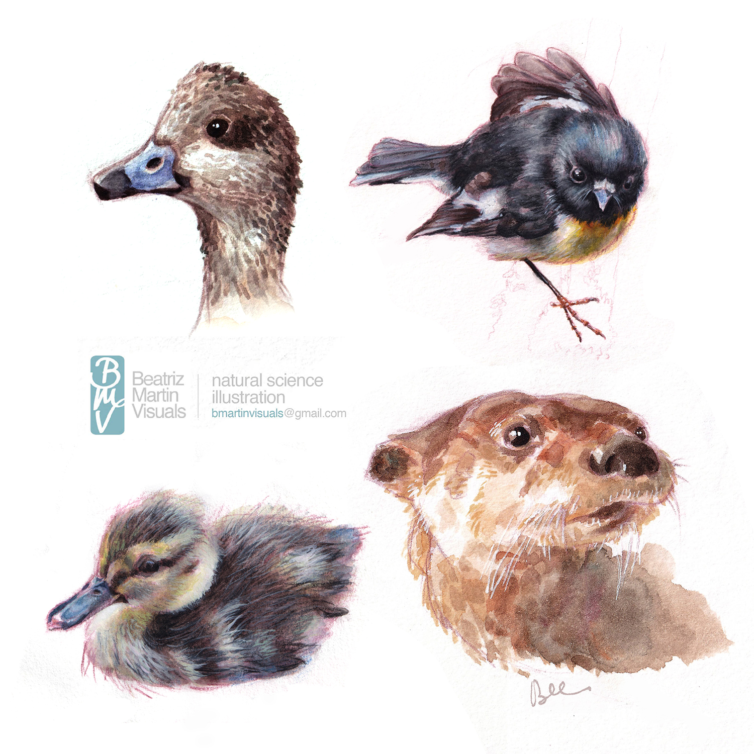 Portfolio sample from Beatriz Martin showing a duck head, a songbird, a duckling and an otter.
