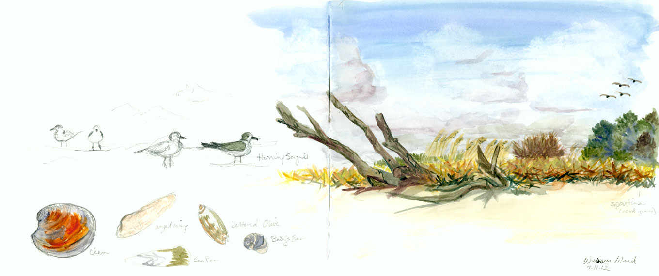 Wassaw Island Sketch by Karen Johnson