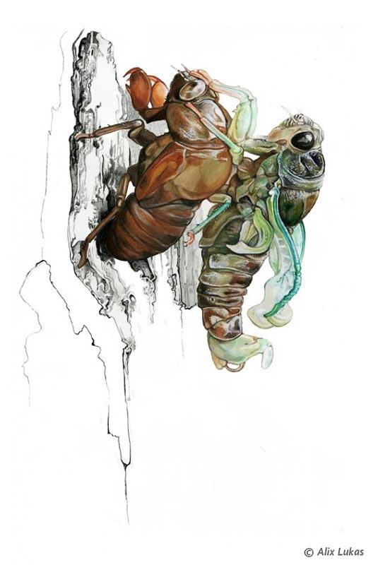 cicadas by Alix Lucas