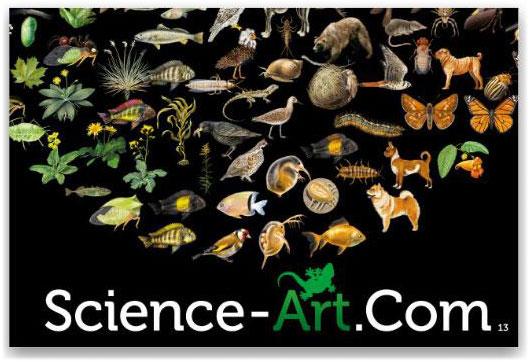 Science Art Sourcebook