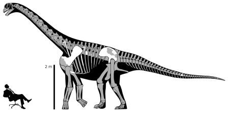 Fig. 2 - skeletal reconstruction of brontomerus mcintoshi. As far as I can tell, the image was