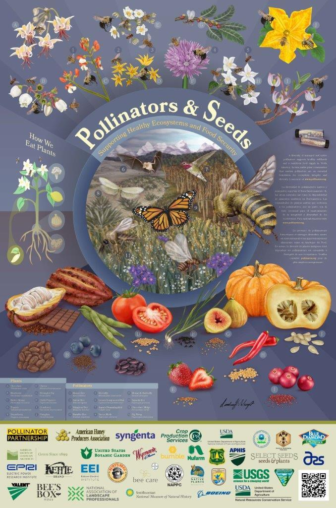 2018 Pollinator Poster by GNSI member Lindsay Wright