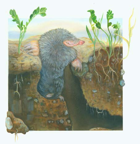 Mole in the garden by Eva Langhorst, acrylic on illustration board