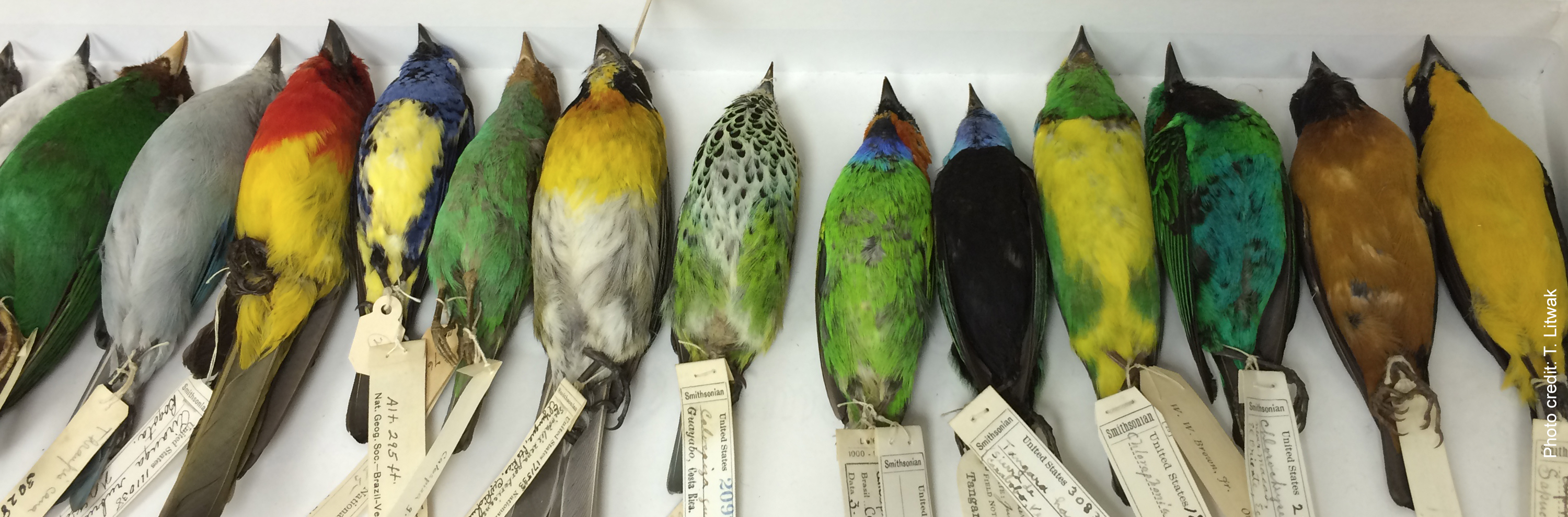 2018 GNSI Conf Registration Teaser Ornithology Collection at NMNH by Taina Litwak