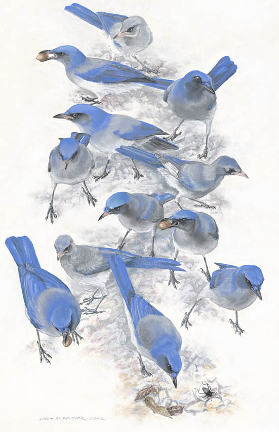 """A Mischief of Jays"" by Linda Feltner"