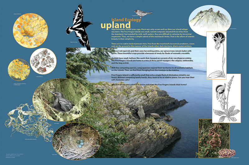Upland island ecology panel, © 2015 Juneau Lighthouse Association and Birzer Studios