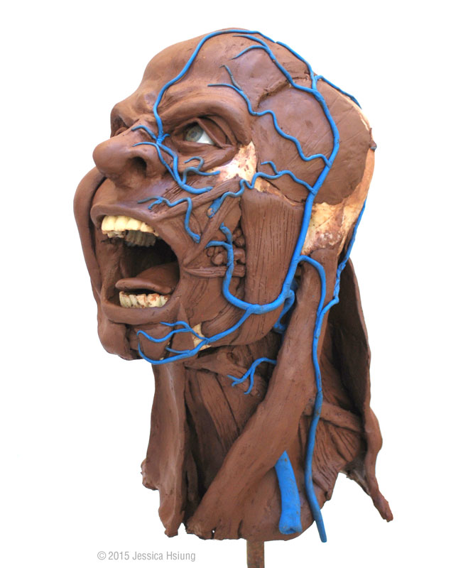 Facial reconstruction using clay and plasticine on a skull model, showing facial muscles in angry expression, as well as facial nerves, © 2015 Jessica Hsiung