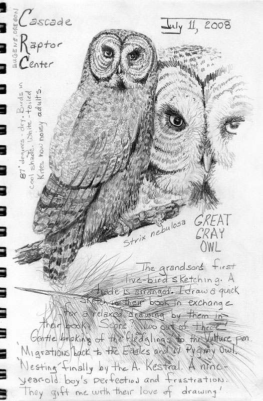 sketchbook entry: Gray Owl with Grandsons; graphite; © 2008 Kristine A. Kirkeby