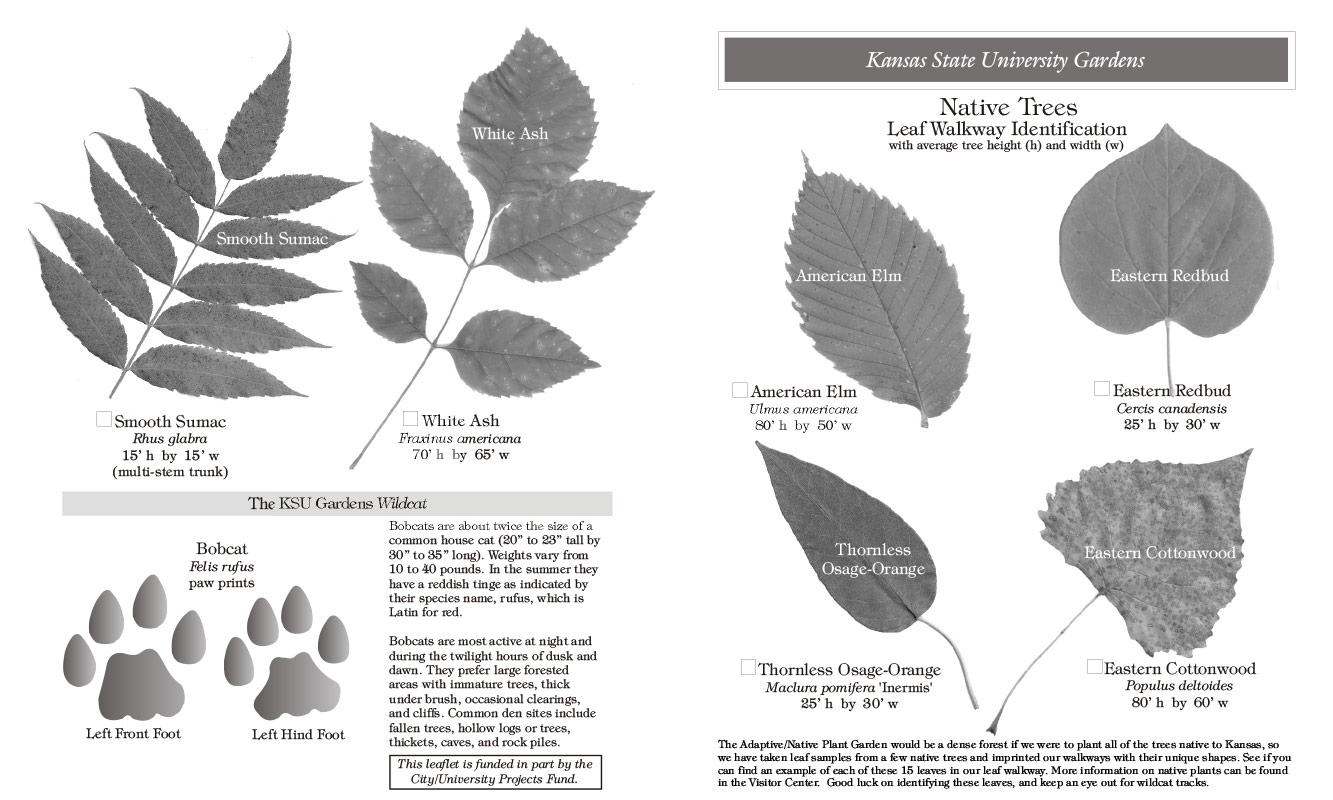 Leaf Rubbing Educational Outreach
