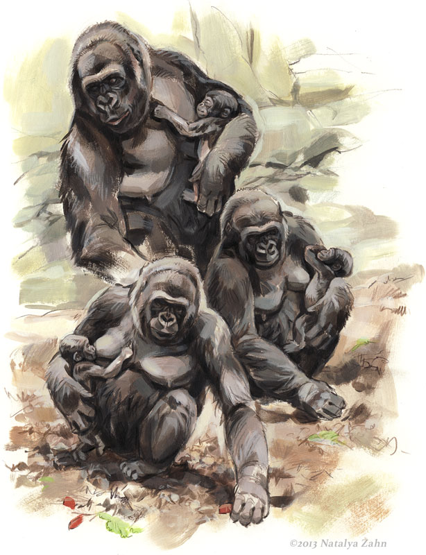 Kiki and baby Kambiri, Lowland Gorillas, acrylic and colored pencil; ©2013 Natalya Zahn