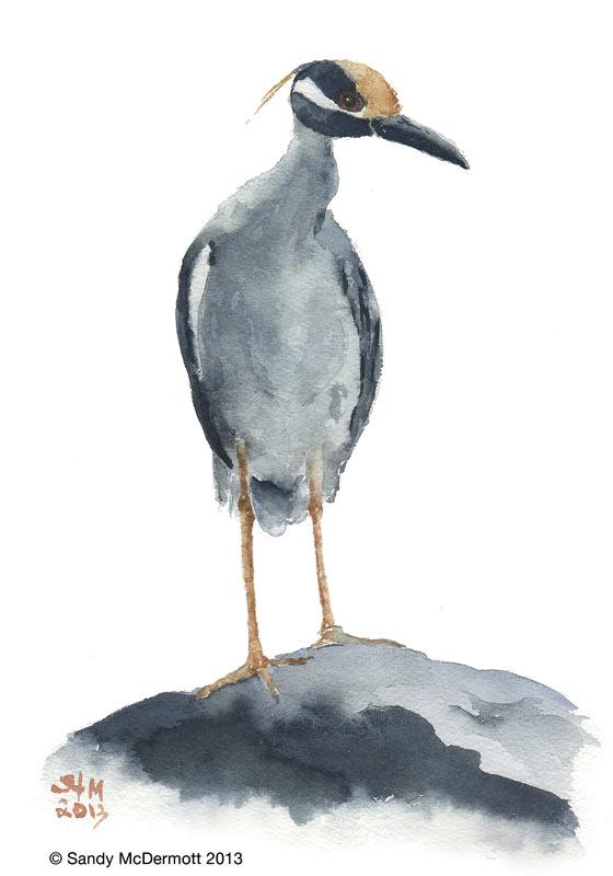 watercolor by Sandy McDermott