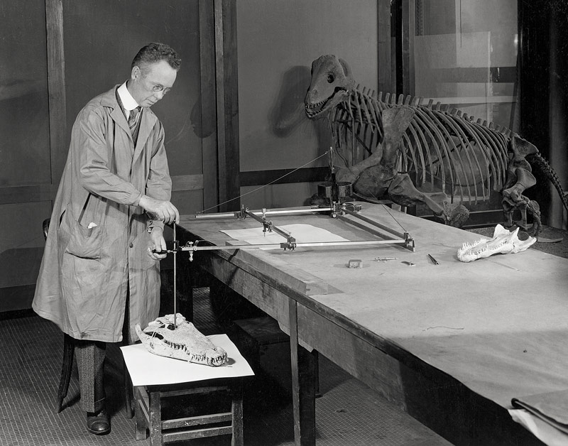 Sydney Prentice using his pantograph to draw a fossil crocodile skull circa 1925. From the NMMH Kellogg collection/photographer unknown.
