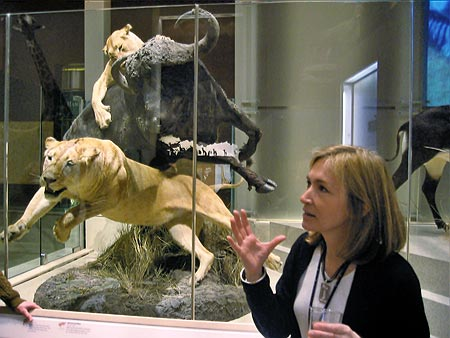 Fig.8 - Sally Love discusses the taxidermy process for the collection of animals chosen from Smithsonian specimens and Kenneth Behring's personal collection. Photo by Britt Griswold.