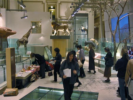 Fig. 9 - GNSI members enjoy a private tour of the new NMNH mammals hall. Photo by Britt Griswold.