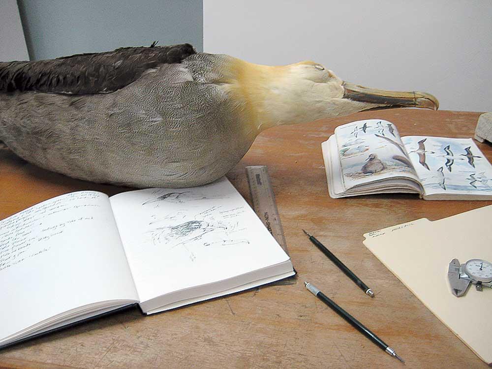 Memb Spotlight ME Taylor_albatross