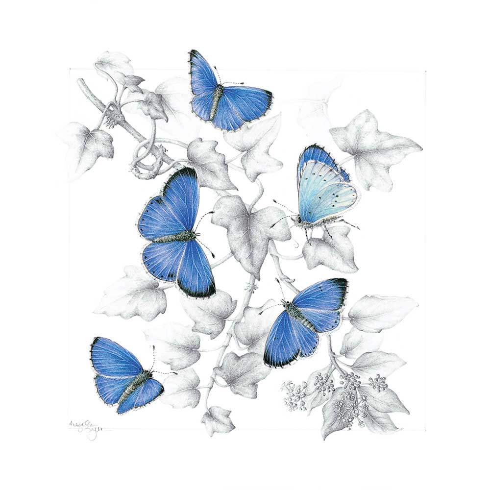 Memb Spotlight ME Taylor_Holy Blue Butterfly