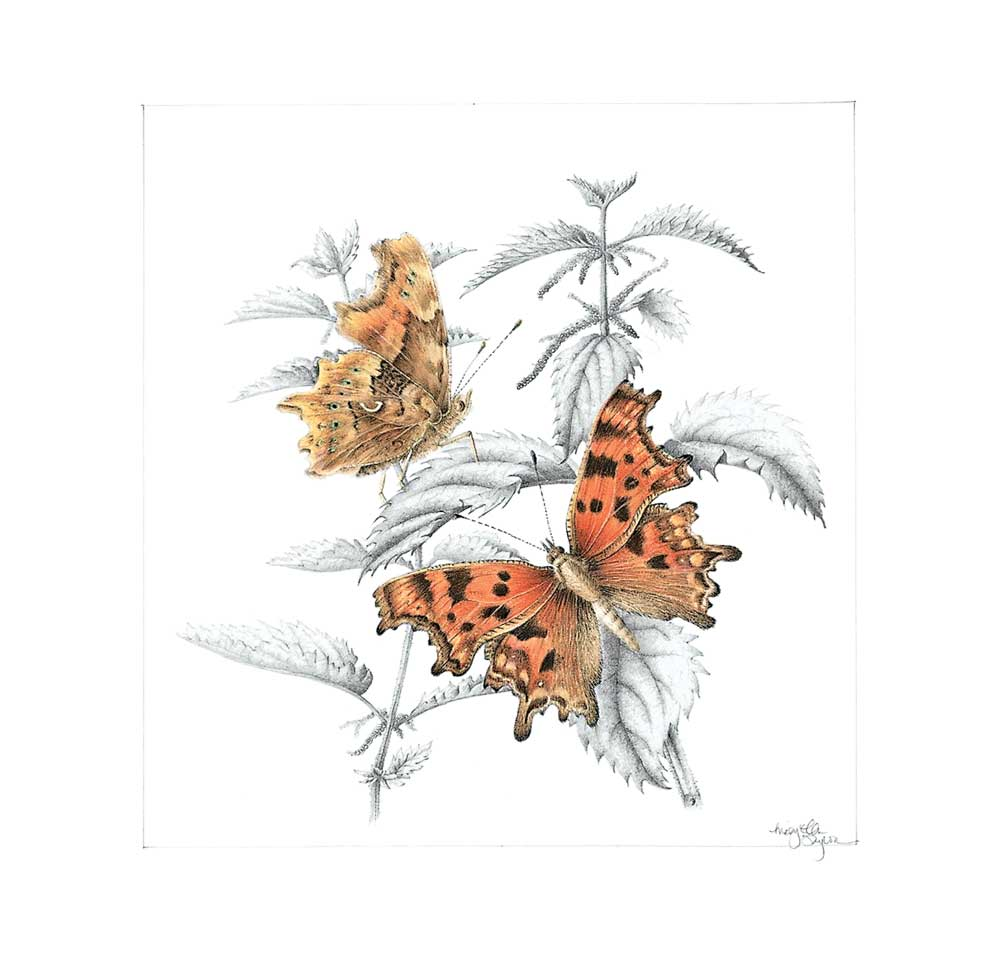 Memb Spotlight ME Taylor_Comma Butterfly