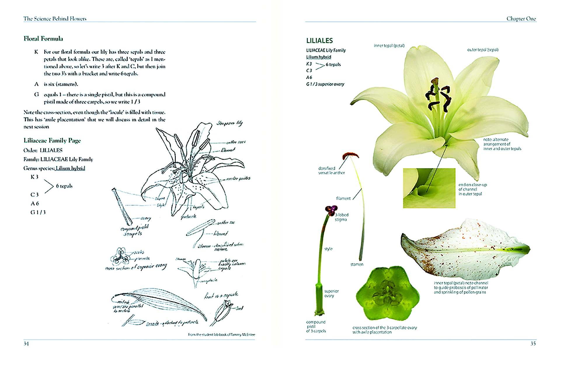 The Sci Behind Flowers_D Rauh_Lily